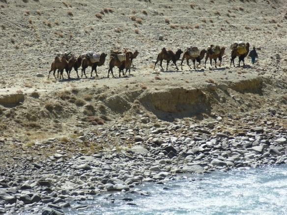 Afghan nomads